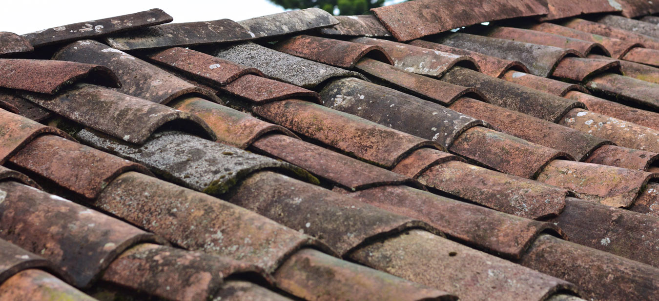insect-roofing-of-inherited-property-first-to-prevent-home-damage